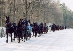horse drawn sleigh ride in Niepolomice Forest