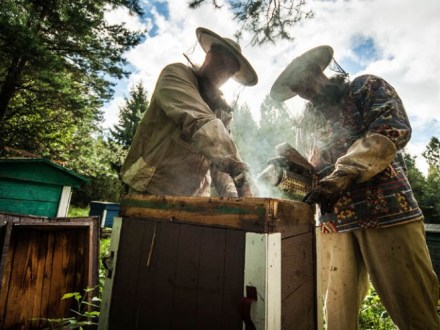 Grandfather Ignacy's Apiary, photo: Rafał Meszka / East News